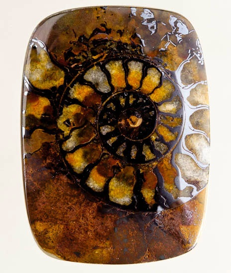 Ammonite in matrix ══════════════════════ FrenchVintageJewelry ﹕☞ https://www.etsy.com/shop/frenchjewelryvintage?ref=l2-shopheader-name ══════════════════════ BIJOUX ☞ https://www.facebook.com/media/set/?set=a.157144491339969&type=1&l=1fdc2f80ae ══════════════════════