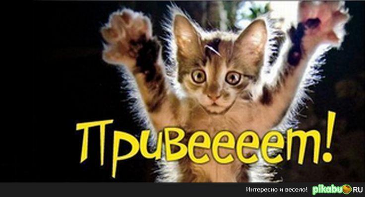 гифки смешные привет привет приколы кошки собаки: 13 тыс изображений найдено в Яндекс.Картинках