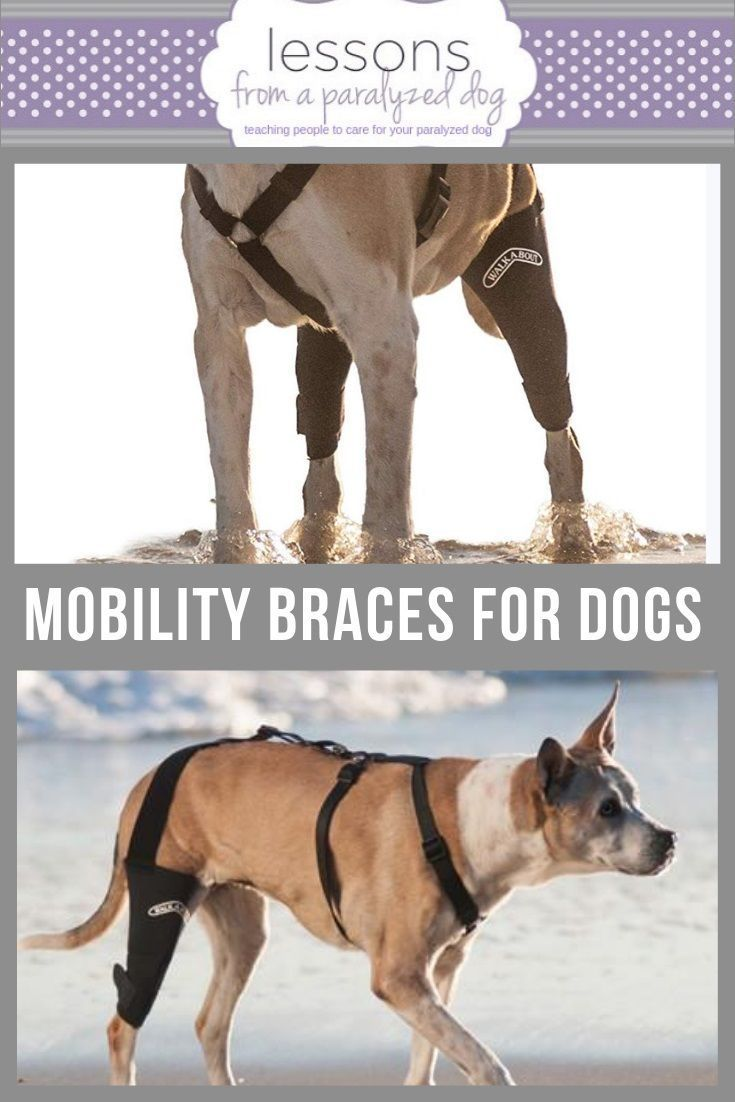 Mobility Brace for Dogs with Arthritis and Hind End Weakness