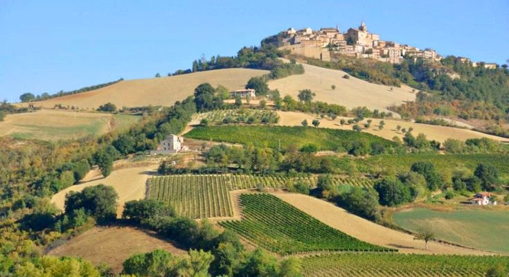 La Torre is situated in a wonderful location below the little town of Montedinove.