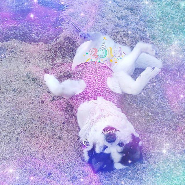 旧年中は皆様に大変お世話になりました。 本年も宜しくお願い申しあげます。 (喪中につき、おめでとうの言葉は控えさせていただきます)  #新年 #迎春 #正月 #挨拶 #愛犬 #オッサン犬 #股間に #添える #2018 #newyear #family #愛犬 #家族
