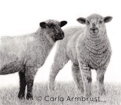 """Sugar and Spice"" by Carla Armbrust Original Fine Art. Pencil drawing. Graphite pencil drawing. Pencil on Bristol board. Sheep. Lambs. Ewe. Ram. Farm animals. Domestic animals."
