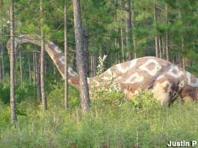 http://hubpages.com/hub/10-Weird-and-Unusual-Things-to-Do-in-Alabama