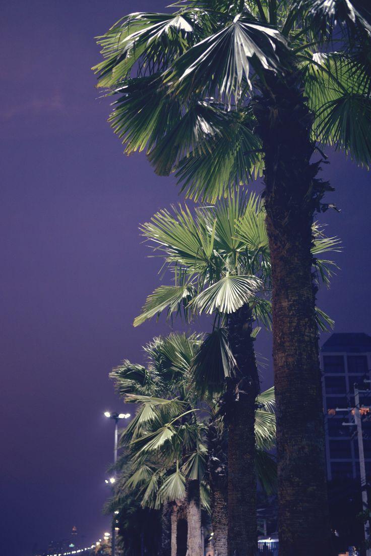 palm trees | Pattaya | Jomtien Beach at night | Thailand