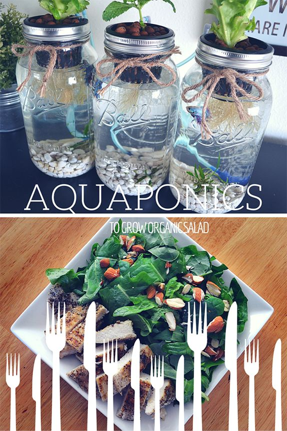 3 Mason Jar Aquaponics Kit   Build Your Own Hydroponics Herb Garden
