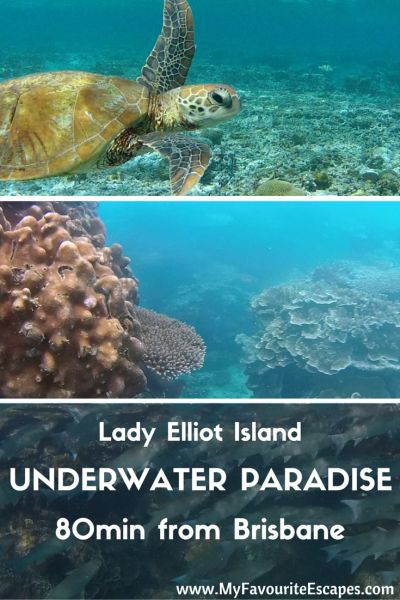 Lady Elliot Island - an Underwater Paradise only 80mn from Brisbane