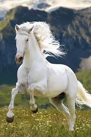 Afbeeldingsresultaat voor mooie paarden