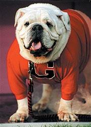 Go Dawgs!!!