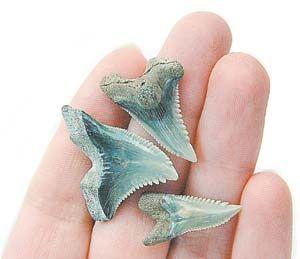 зуб акулы - Поиск в Google