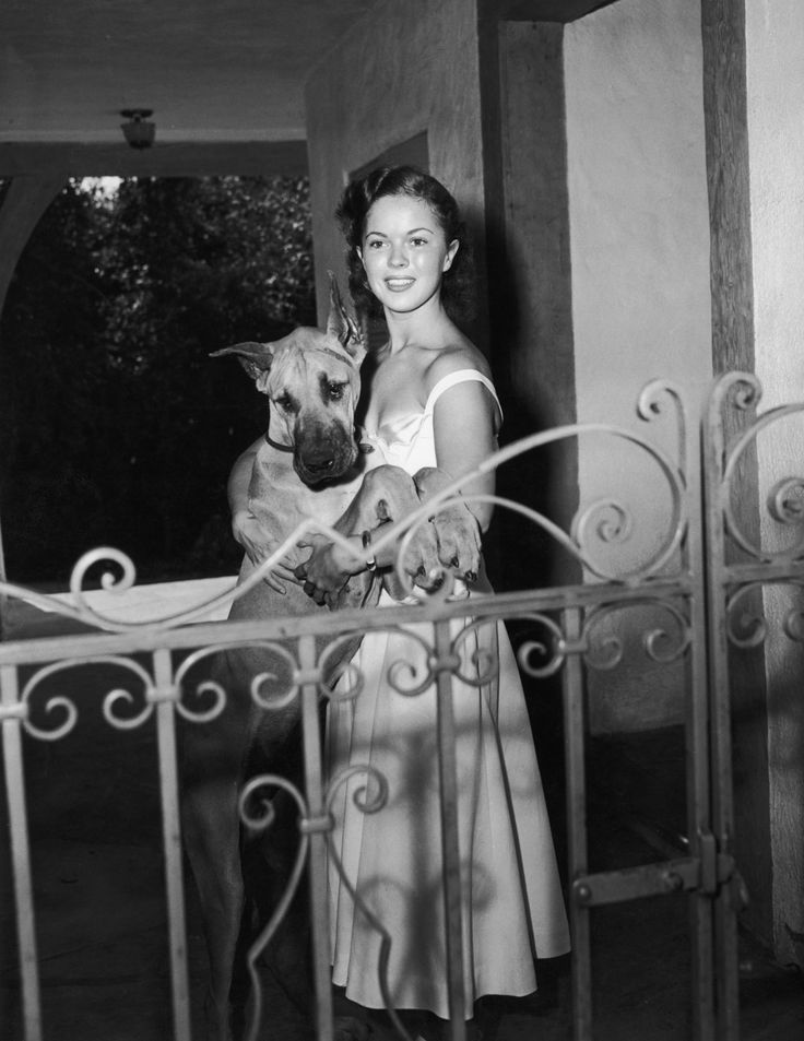 Shirley Temple: Great Danes, Celebrityshirley Temples, Shirleytempl Retrospect, 10 Photographers, Famous People, Temples Teenage, Dogs Lovers, Shirley Templesweetheart, Big Dogs