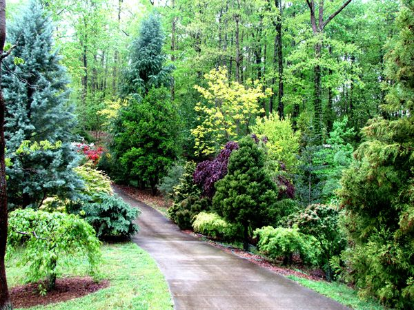 Mixed Grouping Of Conifers And Broadleaf Trees Conifers