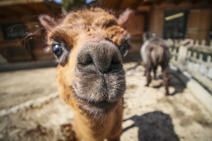 We Took Funny Animal Mugshots, Whilst Traveling Around The World
