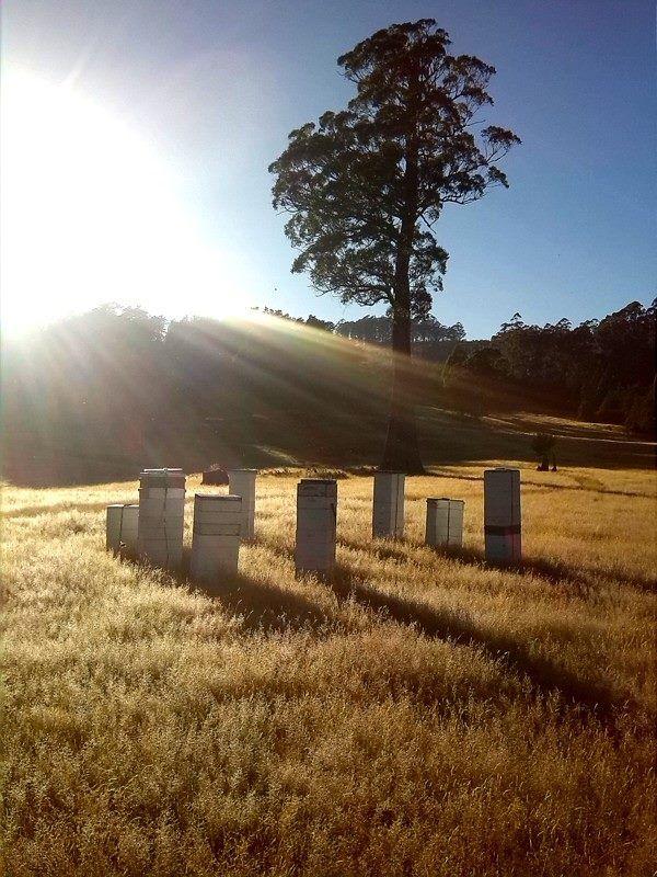 Bee Hives in North West Tasmania