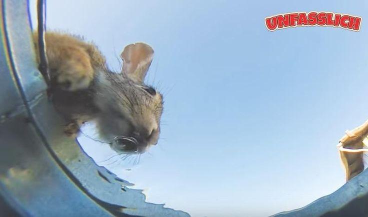 Versteckte Kamera in Wassereimer in Wüste zeigt Tiere beim Trinken. http://unfasslich.com/versteckte-kamera-in-wassereimer-in-wueste-zeigt-tiere-beim-trinken/ #unfasslich #blog #tipps #tricks #lifestyle #news #unglaubliches #hilfreiches #neuigkeiten #interessantes