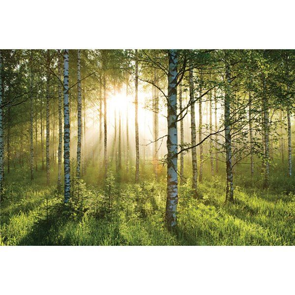 FOREST A 003