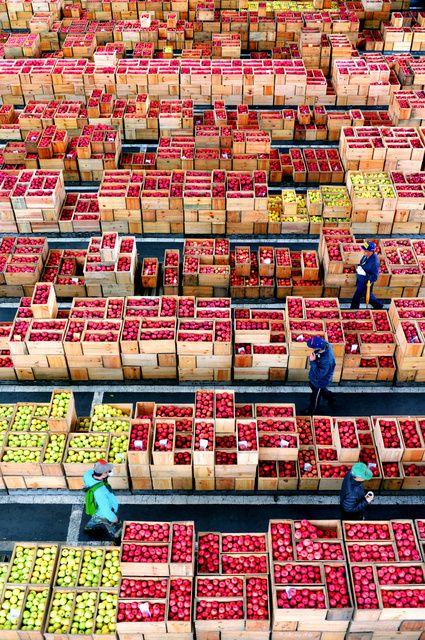 赤や黄色、木箱びっしり 青森のリンゴ市場:朝日新聞デジタル