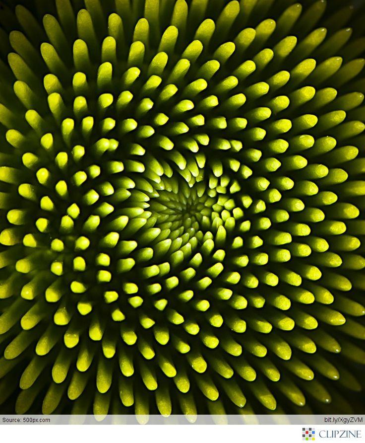 Spirals in nature #spirals
