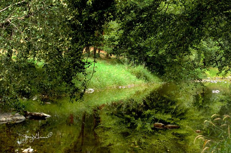 https://flic.kr/p/vST3Fk | Down by our creek yesterday evening | All this wonderful green is such a contrast to everywhere else on our property right now.  Everything is brown and dry and hot.  It was nice to just stand there and soak in a bit of the verdancy even though the heat was still stifling and the smoke was still there.  Actually, believe it or not, it's raining lightly outside right now.  Keeping my fingers crossed it keeps up for a while.