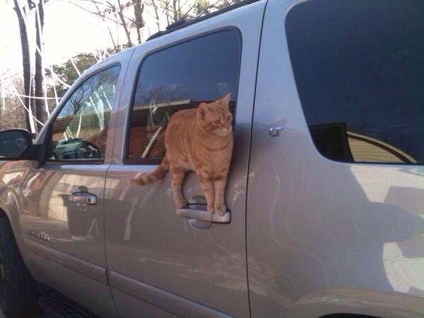 When this cat waited for the perfect moment to steal this car: | The 31 Most Cat Things To Ever Happen: