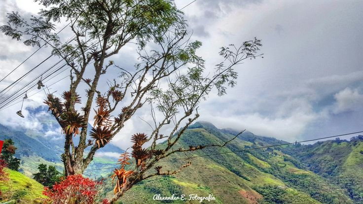las montañas son mi balcón preferido mountain mountaineering tree arbol landscape landscaping paisajismo paisaje montañas