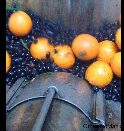 Vinci bottiglie di olio di oliva e estratto di olio e arancia - http://www.omaggiomania.com/contest/vinci-bottiglie-di-olio-di-oliva-e-estratto-di-olio-e-arancia/