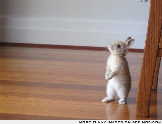 This little bunny looks like peter rabbit