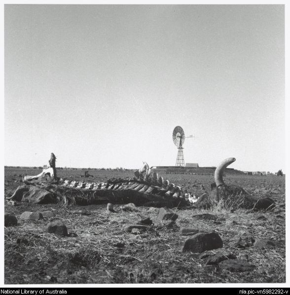 Nolan, Sidney, Sir, 1917-1992. Remains of a cow near a windmill, Queensland, 1952 [picture]
