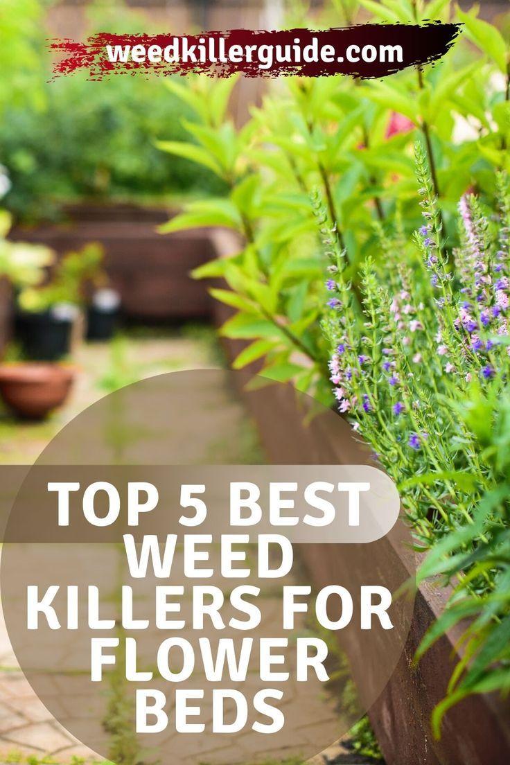 4e43c5a4c9ab9b88ad27c7a194ae09b3 - The Best Weed Killer For Gardens