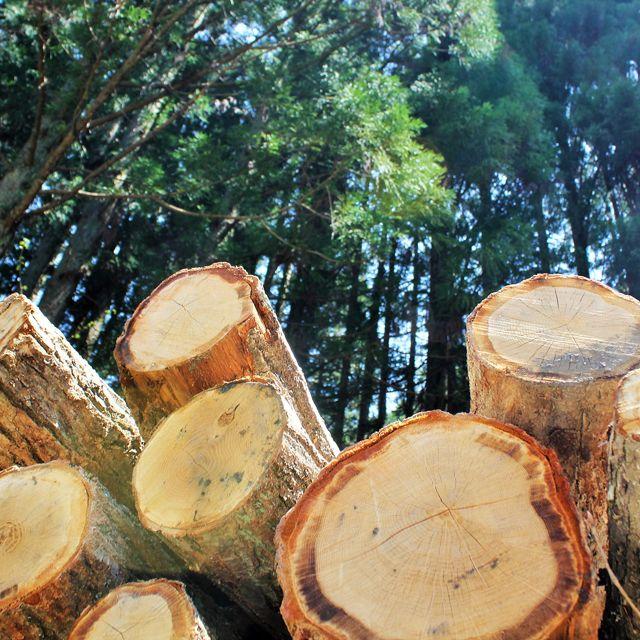 「飛騨五木」(スギ、ヒノキ、ケヤキ、クリ、ヒメコマツ)を飛騨の森からお届け、くらしを 豊かに。森と匠を守っていく。家具、リノベーション、雑貨、塩屋カフェ、ゲストハウス、薪 販売、ファンドを手掛ける地域商社です。