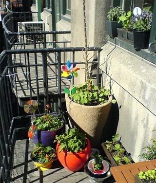 Városi veteményes: Tavaszi teendők | Tudatos Vásárló