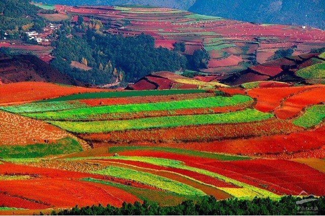 Kumming Farm China