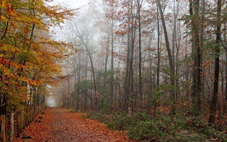 Una familia especial: Noviembre es un mes donde el otoño no hace amague,...