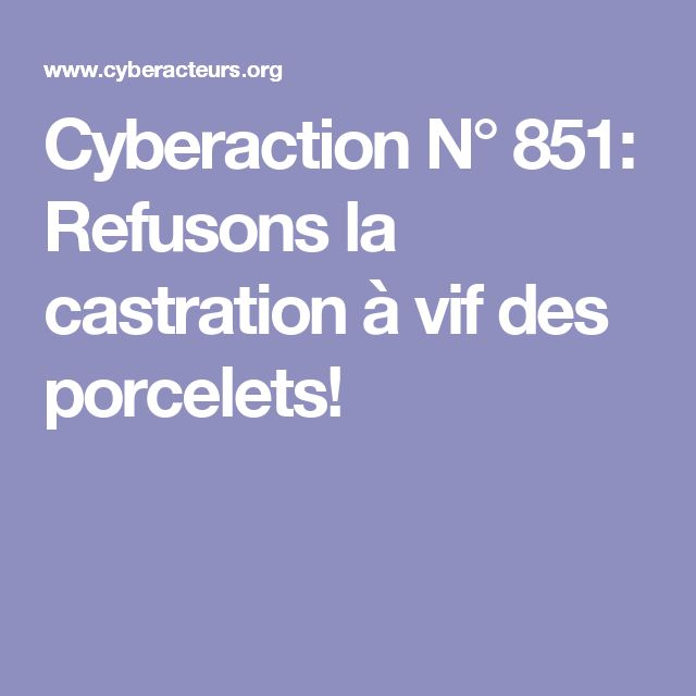 Cyberaction N° 851: Refusons la castration à vif des porcelets!