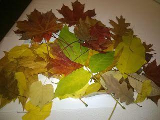 See-Saw: Állat-kirakós őszi falevelekbőlInduljatok őszi f...