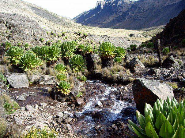 nunavut canada plants