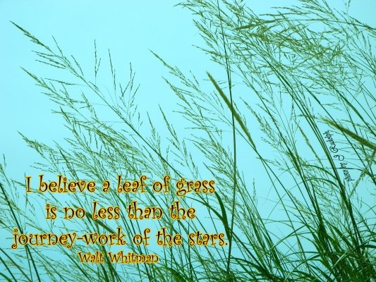 I believe a leaf of grass is no less than the journey work of the stars ~ Walt Whitman