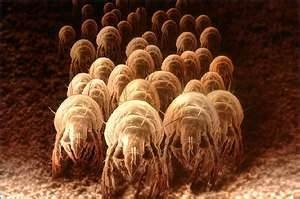 Kill Dust Mites & control allergies: use eucalyptus oil in the wash, and make a spray with water, eucalyptus oil and lemongrass oil and spray around the bed and dust ruffle and rugs when making the beds. Sunlight also kills them, so hang linens out to line dry when possible.
