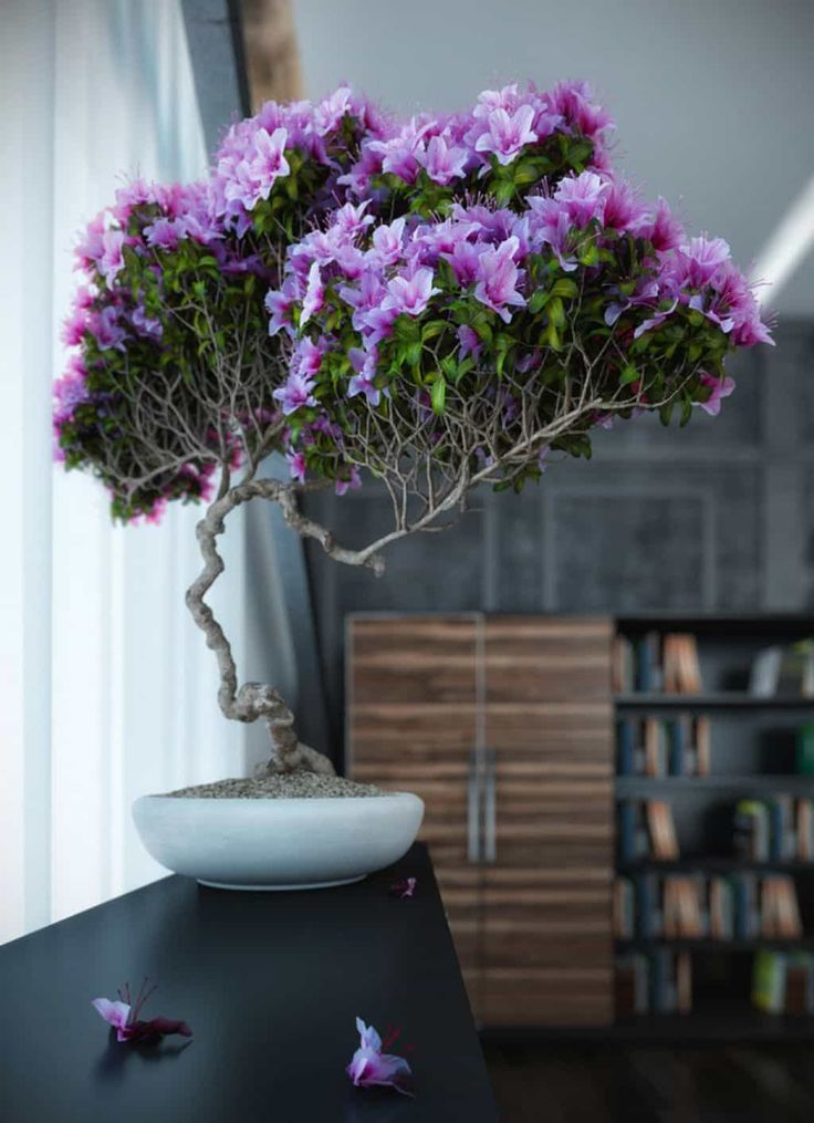 Modern House Interior With Flowering Purple Bonsai Tree Beautiful Bonsai Trees In Your House