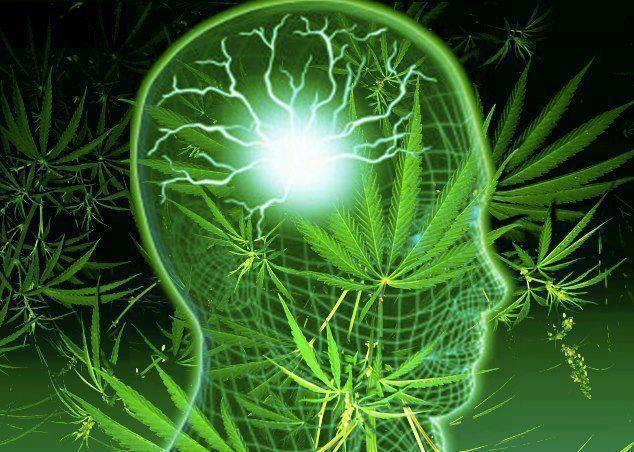 Maconha Maconha é um dos vários nomes populares que se da à planta cujo nome científico é Cannabis. Outros nomes são marijuana, maryjane, tapa na pantera, dedo de gorila, vela, camarão etc[1]. Ela …