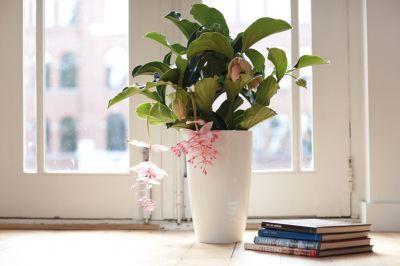 Eleganter Blumentopf mit Hochglanz-Optik