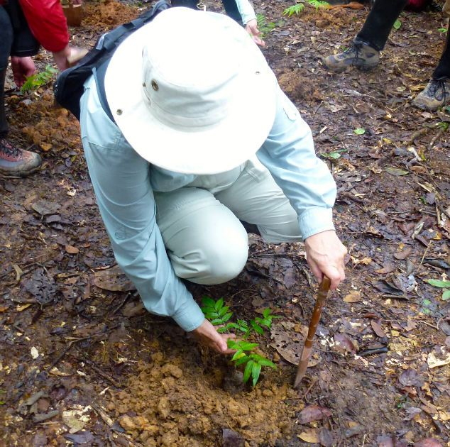 me planting a tree in the rain forest. #AmaazonAdventure #AtoZChallenge  R: Rainforest renewal #ecotourism