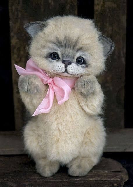 Is this cutest kitty in the world? I think so