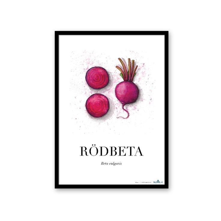 Beetroot poster from the Roots collection by SLOYDLAB.