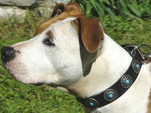 Very chic dog collar. A good alternative to rhinestones...