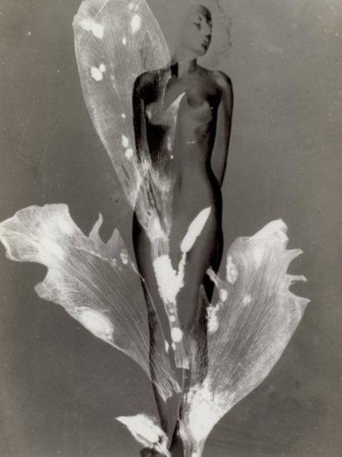 Pierre Boucher. Femme-fleur, inversion négatif-positif, solarisation et photogramme, 1937
