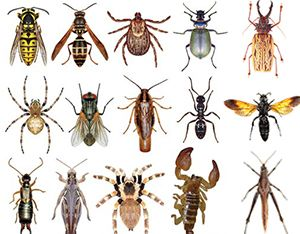 140516_lp_insects_bugs.jpg (300×234)