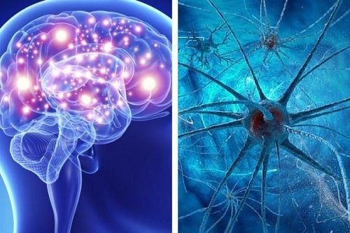 9 habitudes qui tuent les neurones et affectent la santé cérébrale.   Pour éviter la détérioration cognitive, il est très important de stimuler notre cerveau au quotidien, que ce soit en lisant ou en pratiquant des jeux mentaux qui nous aident à l'exercer.