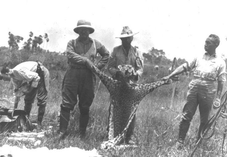 Rondon e Roosevelt - A caça de onças era considerada um prestígio, um troféu da expedição