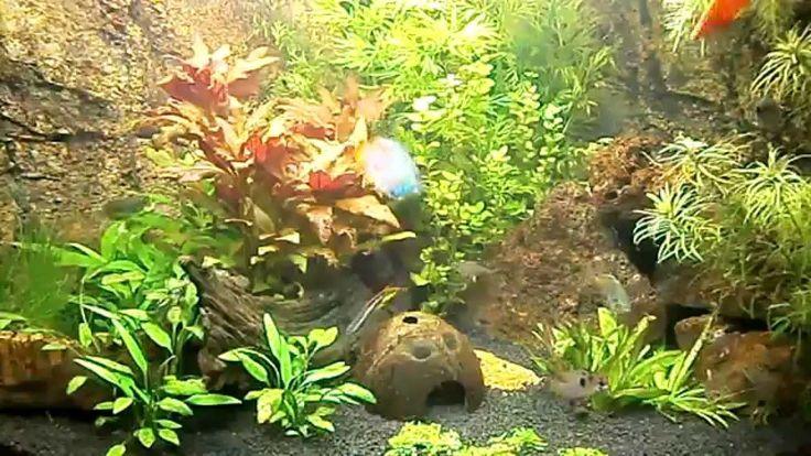 Juwel trigon 190 liter aquarium