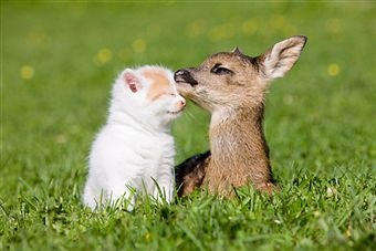 cute kitten and fawnAnimal Pics, Baby Deer, Cat, Animal Pictures, Best Friends, Special Friends, Kittens, Funny Animal, Kitty